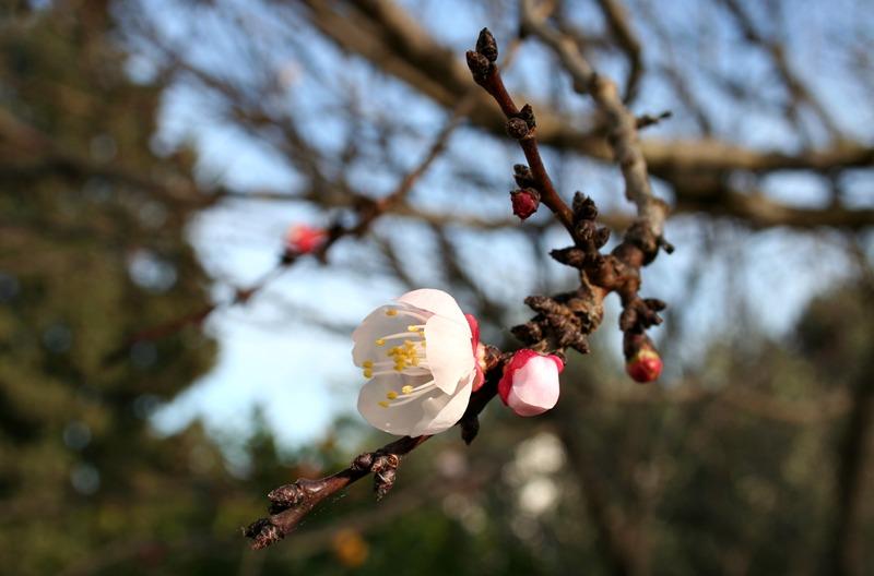 Wiosna w Bolu
