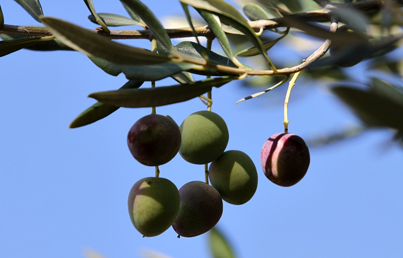 Chorwacka jesień - dary natury