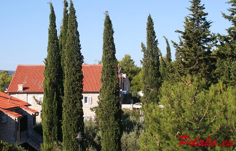 Cyprysy