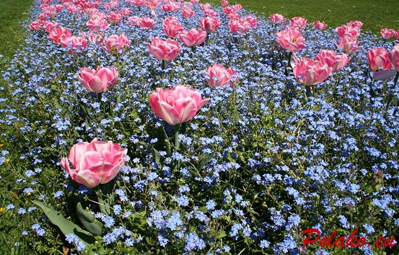 15 wiosennych zdjęć Zagrzebia