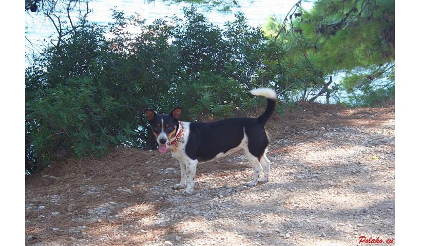 Plaże dla psów w Chorwacji