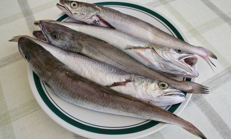 całe_ryby