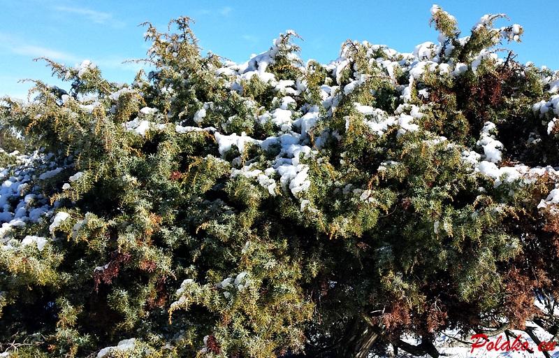 Zima w Dalmacji
