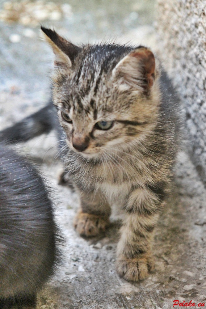 Chorwacja - zwierzęta
